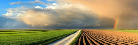 Image result for crop  insurance photos